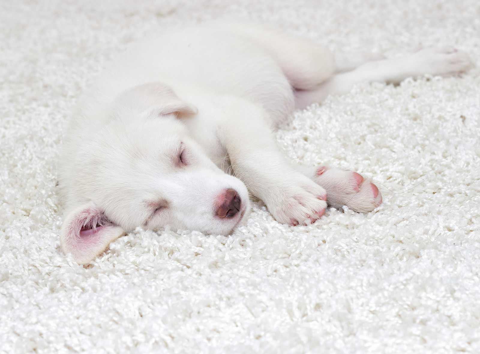 pflegetipps-teppiche-hund-blog
