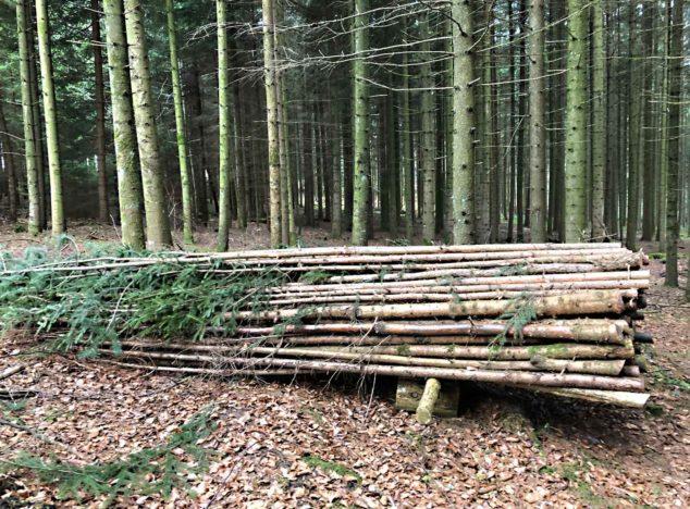 Schweizer Holz in Bremgarten BE