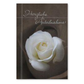 trauerkarte weisse rose